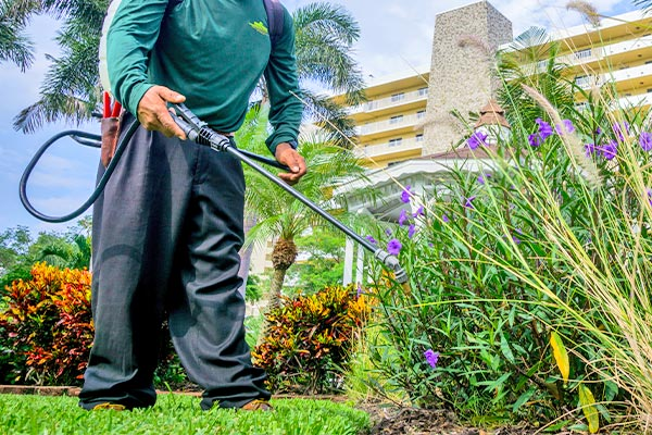Fertilization | Marco Island Land Services Provided by Fortune's Lawn, Land & Tree Service