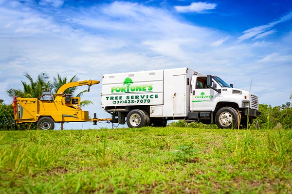 Land Clearing | Marco Island Land Services Provided by Fortune's Lawn, Land & Tree Service