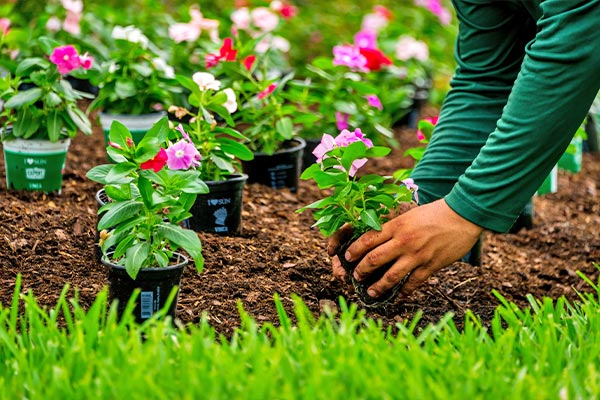 Mulch & Annual Flowers | Marco Island Lawn Services Provided by Fortune's Lawn, Land & Tree Service