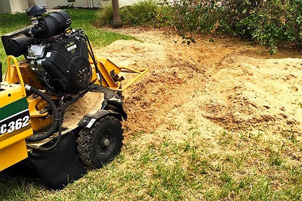 Stump Grinding | Marco Island Tree Services Provided by Fortune's Lawn, Land & Tree Service