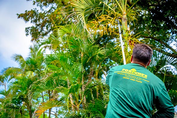 Tree Maintenance Tree Service | Fortune's Lawn, Land & Tree Service on Marco Island, FL