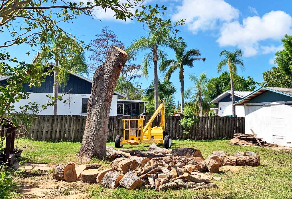 Professional Tree Removal in Marco Island, FL | Fortune's Lawn, Land & Tree Service