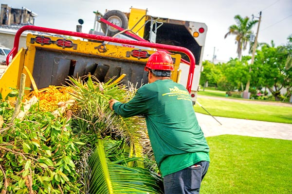 Tree Removal Tree Service | Fortune's Lawn, Land & Tree Service on Marco Island, FL
