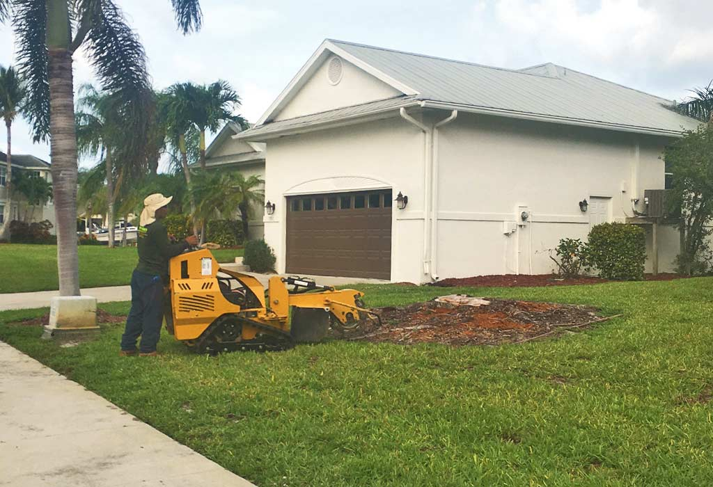 Tree Stump Grinding After Removal on Marco Island, FL | Fortune's Lawn, Land & Tree Service