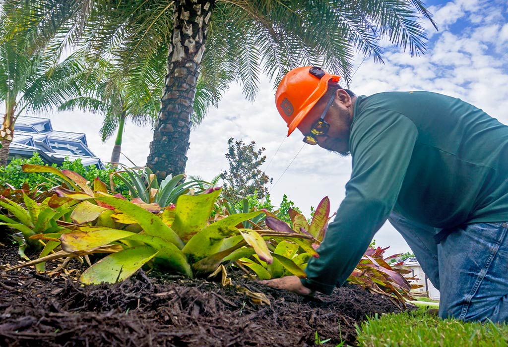 Adding Mulch & Annual Flowers To Your Marco Island Landscape | Fortune's Lawn, Land & Tree Service