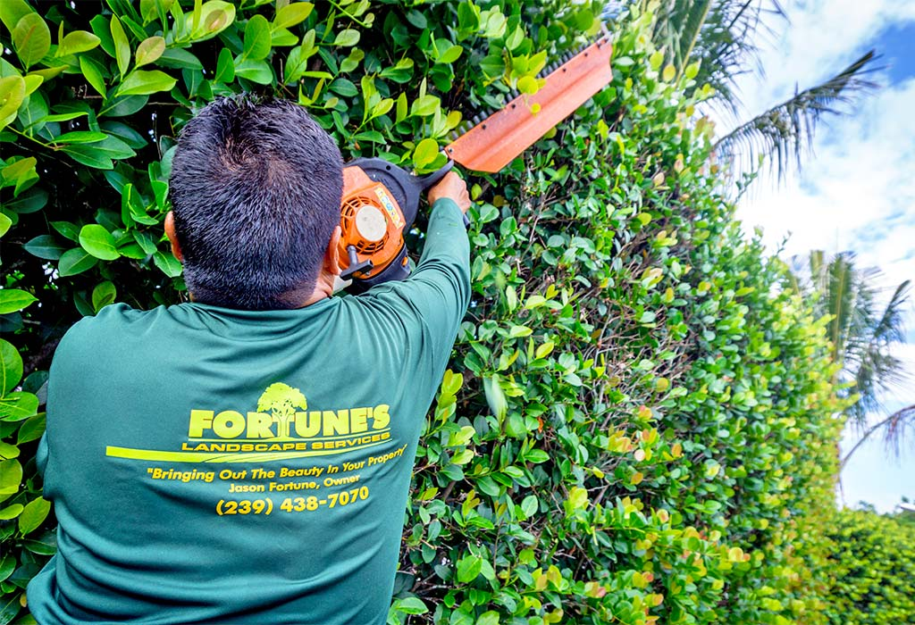 Bush, or Hedge, Pruning on Marco Island, FL | Fortune's Lawn, Land & Tree Service